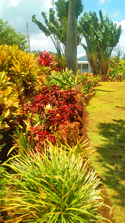 Vibrant garden at Jacoway Inn in Calibishie, Dominica
