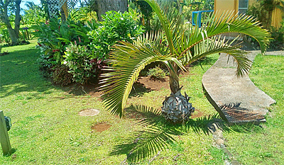 Dominica guest house with natural lawn grass.