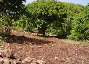 Nevis Sea View Land - This soil is rich and fertile and with a steady tradewind breeze, the land should always stay pleasantly cool.