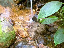 Dominica Villa with stream