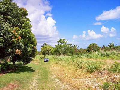 Barbados Land For Sale
