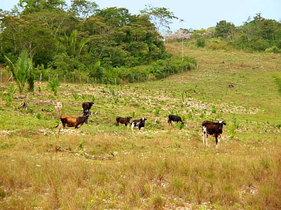 Belize Cattle Ranch for Sale