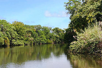 Belize Mullins River