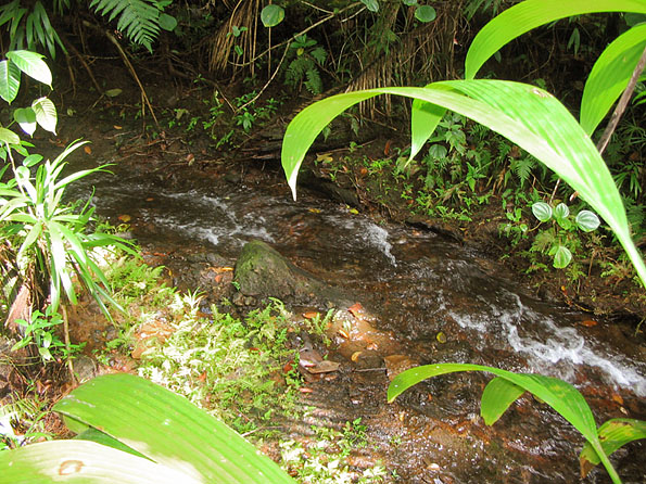 Dominica Mountain Property