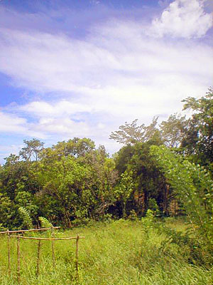 Land for Sale in Portsmouth, Dominica