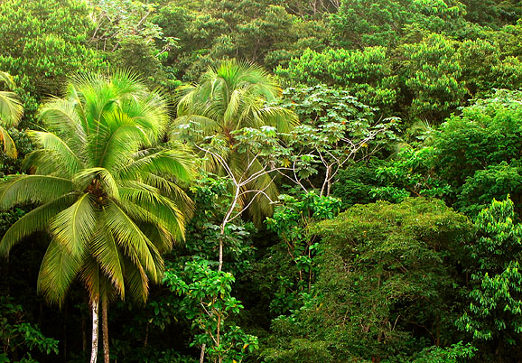 Calabishie Land for Sale, Dominica