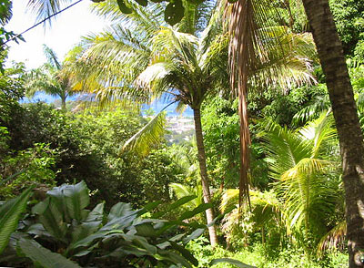Dominica Land for Sale at Reigate