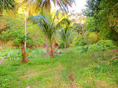 Dominica Riverside Land