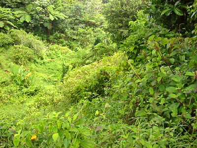 Land for Sale at Laudat, Dominica