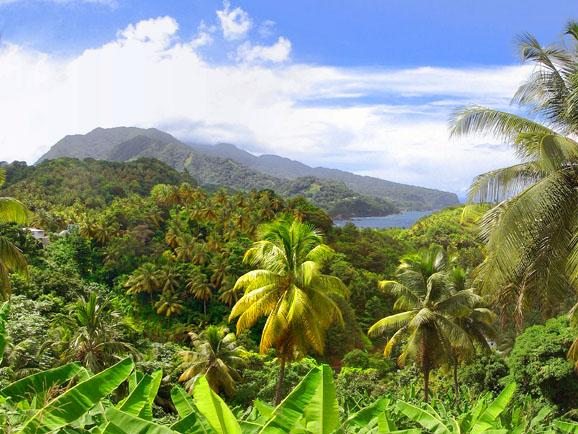 Dominica Sea View Property