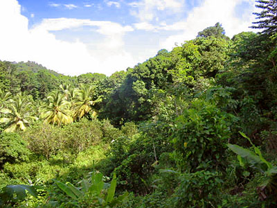 Dominica Mountain Land