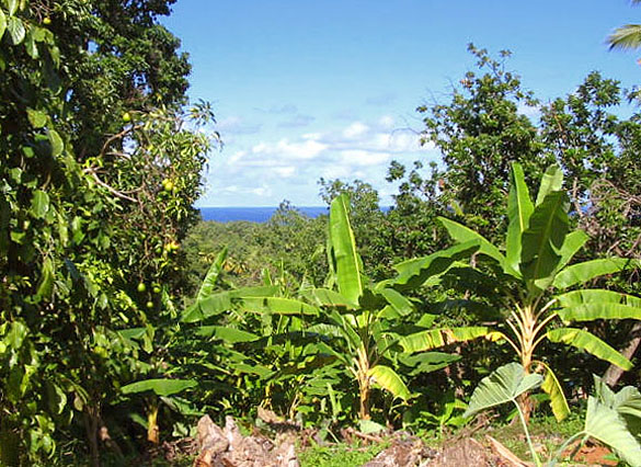 Sea View Land in Dominica