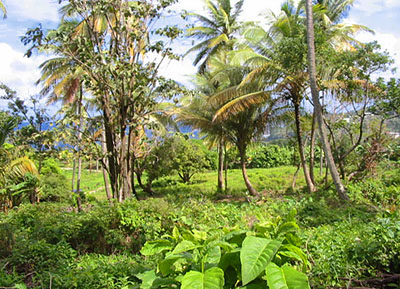 Land for Sale at Marigot Dominica