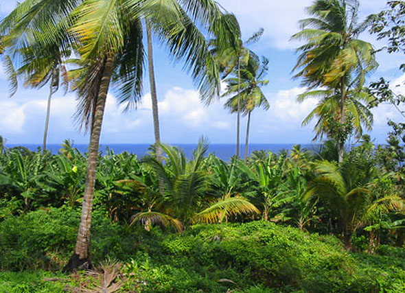 Marigot Dominica Land for Sale
