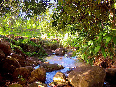 Riverside Land in Dominica