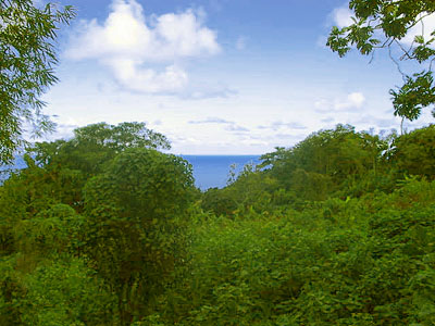 Dominica Boetica Land for Sale