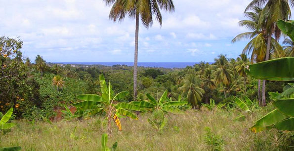 Dominica Land for Sale