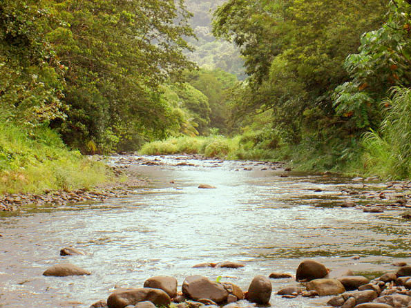 Dominica Emerald Pool Land for Sale