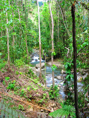 Dominica Eco Land