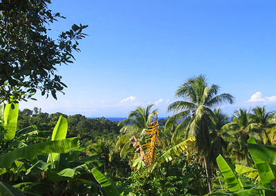 Dominica Agricultural Land for Sale