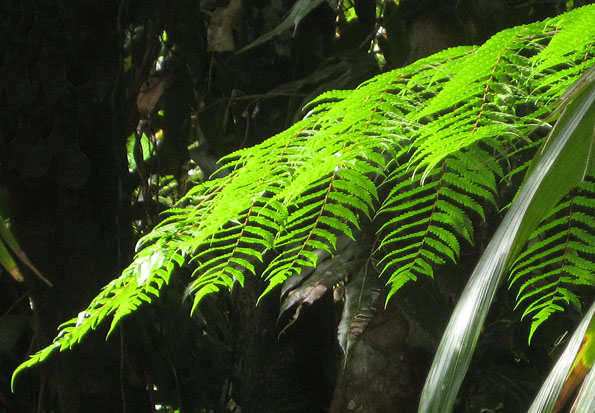 Dominica Rainforest