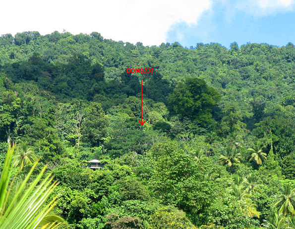 Dominica Forest