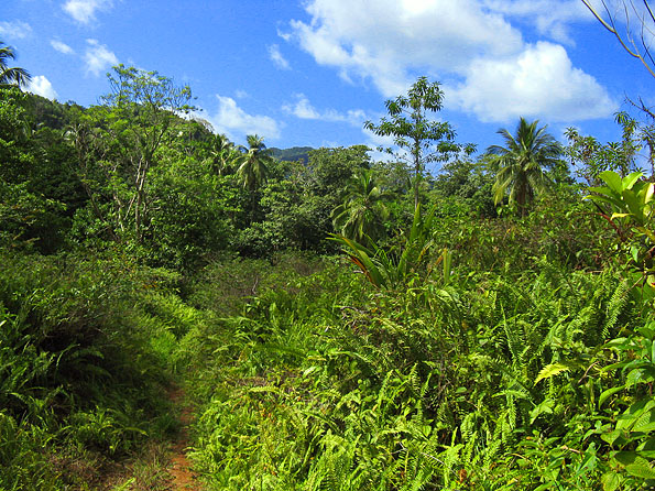 Dominica Agricultural Land