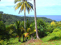 Featured Caribbean Land
