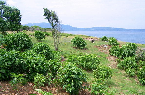 Dominican Republic Plot