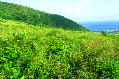 St. Kitts land for sale