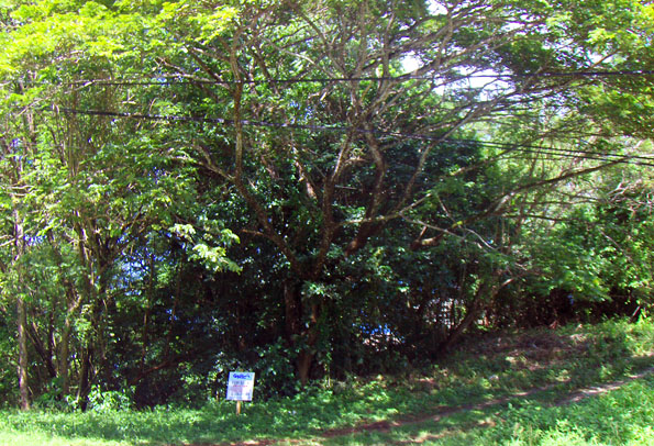 Tobago Building Land for Sale