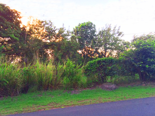 Tobago Seaview Land For Sale